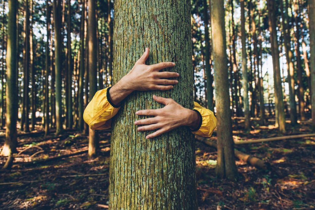 šuma 1
