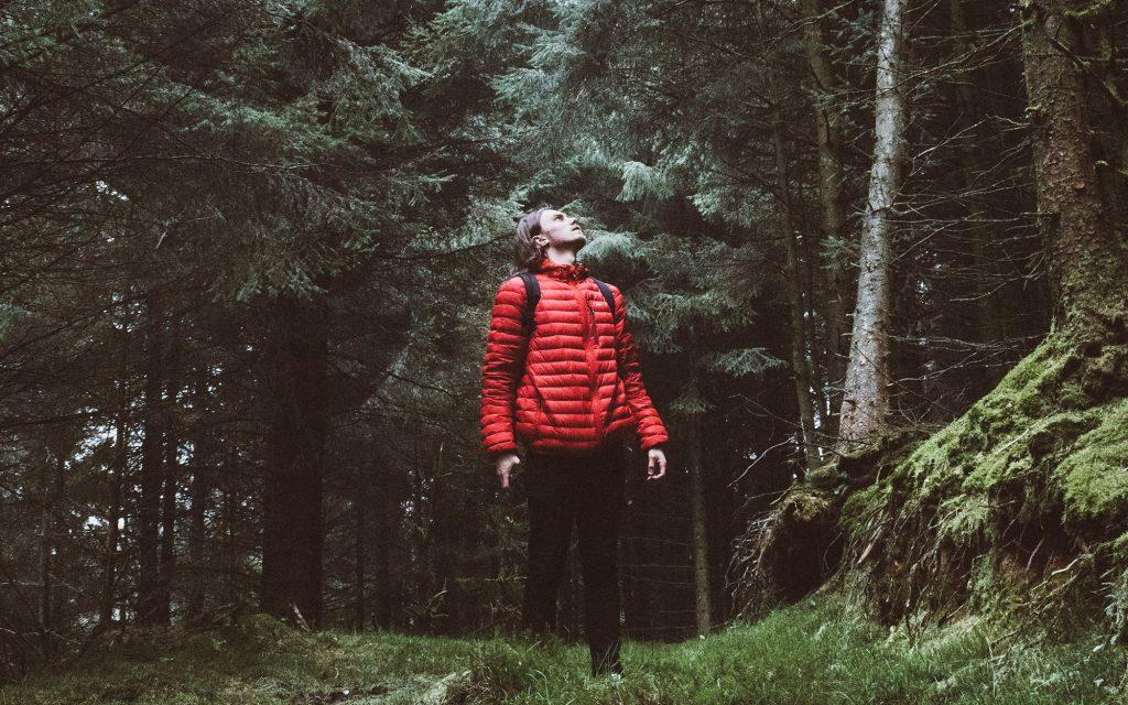 šuma 3