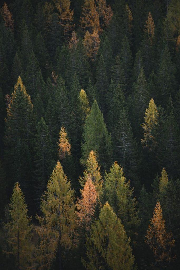 šuma 5